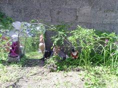 Mirror in shade garden