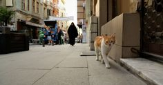 This documentary profiles distinctive street cats in Istanbul and the human communities that interact with them.