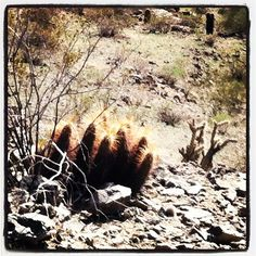 prickly...