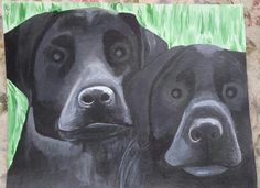 Black Labs, Sonny and River March 12th, 2017