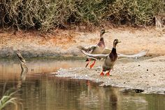 Aves na Quinta do Lago