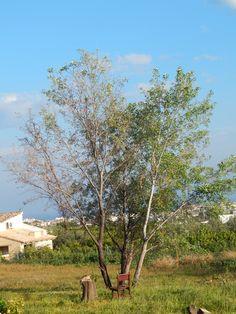 Crecen árboles