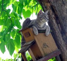 Chloe as a kitten - Otter Lake, Michigan — Fotopedia