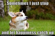 funny dog pictures - Sometimes I just stop  and let happiness catch up #teachdogtocome