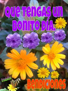 Funny Good Morning Quotes, Good Morning Messages, Good Morning Greetings, Positive Phrases, Lilac Wedding, Pink Bouquet, Plants, Love Of God, Spanish