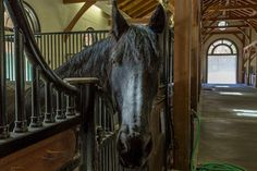 Horse inside of their stall