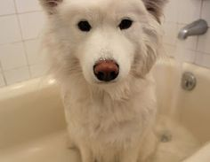 All-Natural Bathtime for Tinkerbelle