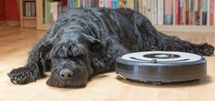 10 Ways To Have A Dog AND A Clean Home  #dogs