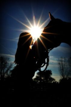 I love silhouette photography