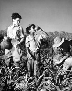 In a cornfield on the Ryssel farm, a boy drinks his mid-day wine ration from a gourd given to him by the farmer's daughter, Worcester, Soth Africa, April (Photo by Margaret Bourke-White/The LIFE Picture Collection/Getty Images) Classic Photographers, Margaret Bourke White, Farm Images, African Life, History Images, West Africa, South Africa, Documentary Photographers, Life Pictures