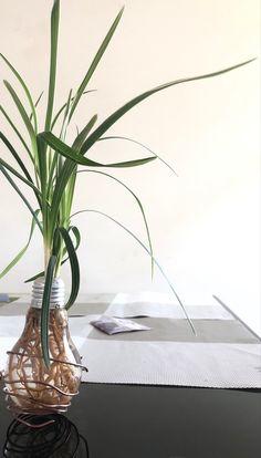 Light Bulb Plant, Planting Bulbs, Glass Vase, Plants, Plant, Planets