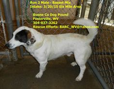 For more information or to adopt this guy please contact the Boone County Dog Pound in Fosterville WV at 304-837-3262.