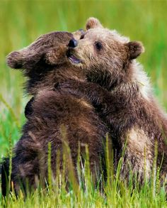 Cub Cuddles! Baby Animals Pictures, Animals And Pets, Cute Bear, Wildlife Photography, Polar Bear, Cuddling, My Best Friend, Black And Brown, Cats