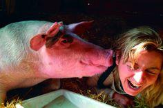 Antiespecismo   La historia de River, un cerdo refugiado en el Santuario El Hogar - El Salto - Edición General
