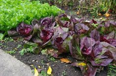 Try These Layout Ideas Garden Layout Ideas for Small Gardens. Don't have a lot of room? No prob! Get layout ideas for a regular garden, raised bed, container garden, vertical garden and more!Garden Layout Ideas for Small Gardens. Types Of Tomatoes, Types Of Vegetables, Organic Vegetables, Growing Vegetables, Veggies, Gardening Vegetables, Growing Herbs, Vegetable Garden Planner, Backyard Vegetable Gardens