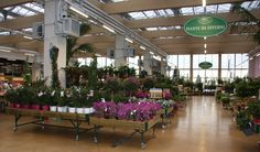 La serra calda e la serra fredda ospitano ospitano piante da esterno e da interni sempre diverse, seguendo il ritmo delle stagioni