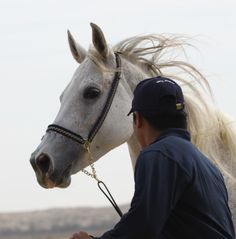 Daughters of the Wind: a blog on desert arabian horses, past and present