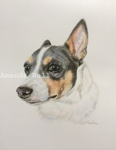 Piper-Bleu a Rat terrier from Oregon, colour pencil portrait. www.facebook.com/Yowyowtails