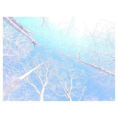 【tulip_0420】さんのInstagramをピンしています。 《. 山梨県は北杜市に、来ています○ 木の揺り椅子に座ってゆらゆらしてる、 寒すぎる−2度( ◜ω◝ ) . #reco_ig #ig_japan #instagood #iPhone #ファインダー越しの私の世界 #写真撮ってる人と繋がりたい #写真好きな人と繋がりたい #森 #北杜 #イマソラ #白樺》