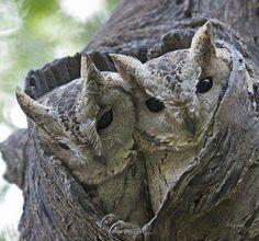 Owly Molly Camouflage Pinned by www.myowlbarn.com