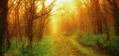 misty-path-1629790-1920x1440