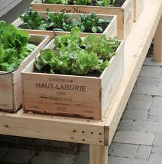 what a great idea for a vegie garden - perfect for our balcony (From INK > LLH Design Blog)