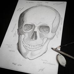 De vez em quando é bom voltar à base.  Será que existem modelos como este de outras etnias? Será que tem características diferentes que seria interessante estudar? (É sempre esse cara, com queixo de super man, né, nos livros.) Gosto muito de caveiras. Acho essencial pensar a morte diariamente.  #treino #sketch #skull #backtobasics #exercíciodedesenho #drawingexercise #caveira #morte #supermanchin #queixodesuperhomem #etnias #dúvida