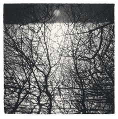 Beaux Arts Gallery - Sarah Gillespie