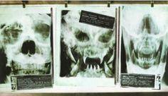 Alien vs. Predator Predator Canvas Wall Poster
