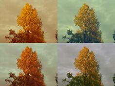 Autumn at home.