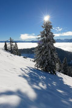 early arrival of winter #snow white landscape nature blue sky tree