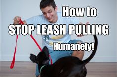 Pulling on walks is uncomfortable for both you and your dog. Teach your dog to not pull on the leash with this video, courtesy of Professional Dog Trainer, Zak George. | Dog Training
