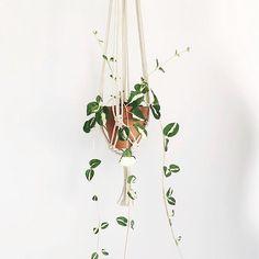 Hang on cutie 🌱 #houseplants