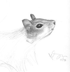 Was working towards photo-realism with this pencil sketch. Oct 1998    Based on a photo I took at Bok Tower Gardens. The squirrels there are super-friendly and very photogenic, as far as squirrels go...