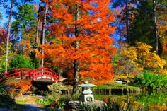 """Beautiful impressionistic view of fall at the Sarah P. Duke Gardens by photographer Lee Capps! """"Duke Gardens Autumn Abstract"""""""