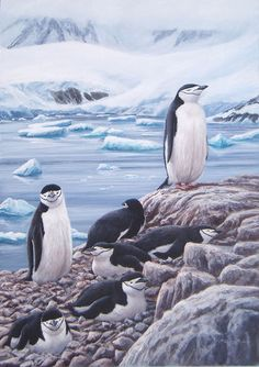 Chinstrap penguins by Jeremy Paul
