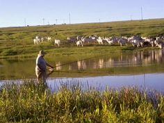 Gado de corte e pescaria.  http://www.portalanaroca.com.br/da-ate-gosto-esta-pescaria-lindo-lugar-um-sossego/