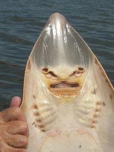 Deep Sea,Viper-fish
