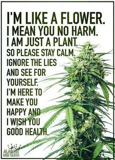 9 Best Hemp Images In 2018 Cannabis Hemp Plants