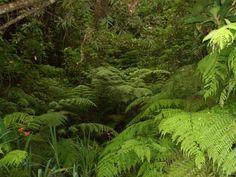 Floresta Laurissilva