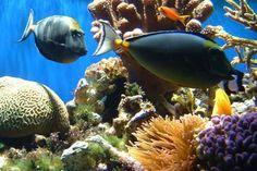 Pigeon Island snorkeling   Eastern Sri Lanka
