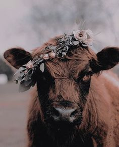 (disambiguation) Cow is a colloquial term for cattle, and the name of female cattle. Cow, cows or COW may also refer to: Farm Animals, Animals And Pets, Funny Animals, Cute Animals, Vegan Animals, Wild Animals, Smiling Animals, Black Animals, Nature Animals