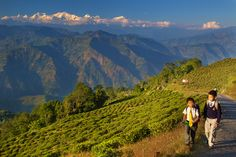 Pretties picture of Darjeeling, Mt. Kanchendzonga, local kids and the tea fields. Photo: Daniel Peckham