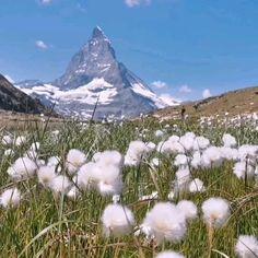 Wanderung vom Gornergrat nach Zermatt. Die Aussicht auf die Berge ist atemberaubend. Zermatt, Places Ive Been, Nature, Life, Mountains, Switzerland, Naturaleza, Nature Illustration, Outdoors