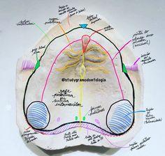 Topografia da área basal da Maxila - #odontologia #odonto #tpd #protesedentaria #protesetotal #dentista #dentistry #vidadedentista…