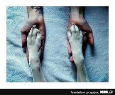 Ο σκυλος ειναι ο καλυτερος φιλος του ανθρωπου..Πόσοι συμφωνείτε?