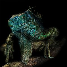 "by Horus Nikopol ~ Miks' Pics ""Animals V"" board @ http://www.pinterest.com/msmgish/animals-v/"