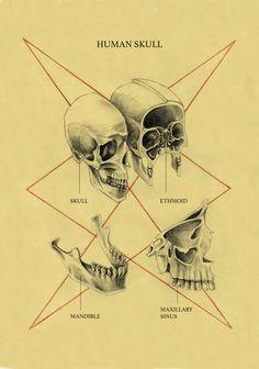 "forehead-mouth:  ""Human Skull. 2017.  """