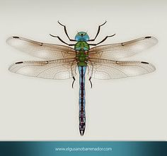 Drawn dragonfly art nouveau - pin to your gallery. Explore what was found for the drawn dragonfly art nouveau Dragonfly Images, Dragonfly Tattoo Design, Dragonfly Insect, Tattoo Designs, Tattoo Ideas, Dragonfly Illustration, Dragonfly Painting, Scientific Drawing, Sugar Skull Tattoos