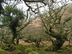 Wild Oaks on Dartmoor